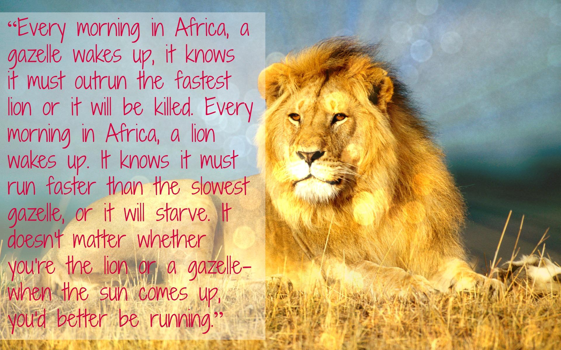 Motivation Monday! Are you a Lion or a Gazelle? | The ...